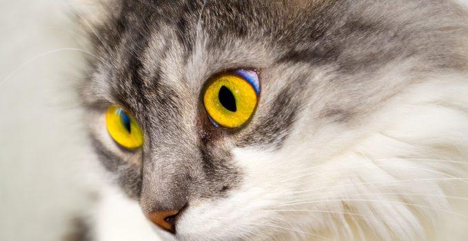 quel cancer chez un chat