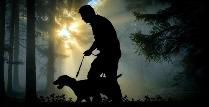 collier et laisse pour un chien