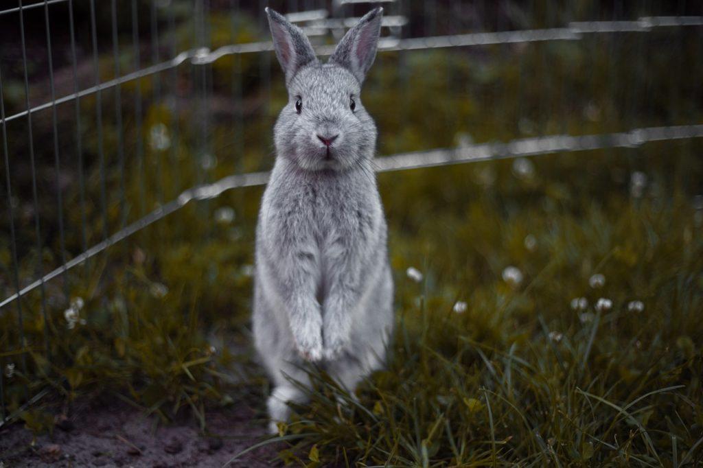 ce qu'ils faut savoir sur la santé du lapin