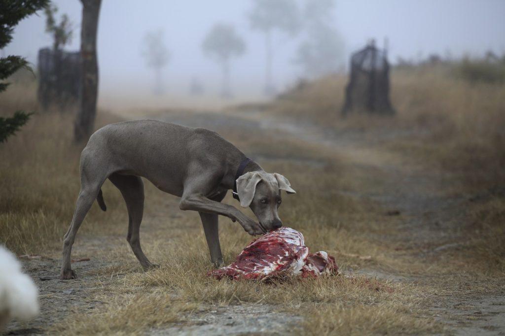nourriture de qualité pour un chien