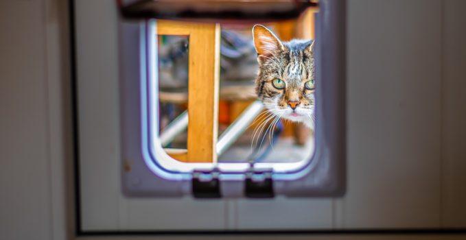 Trappe automatique pour chat