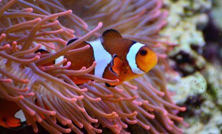 faire découvrir les poissons à vos enfants