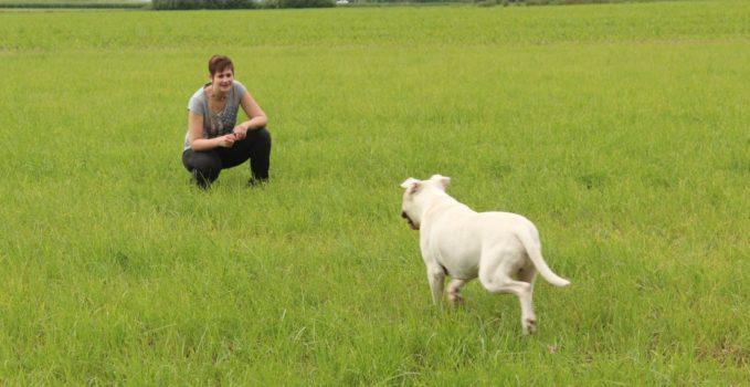 renforçateur en éducation du chien