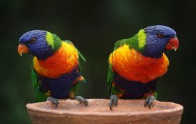 élever des perroquets