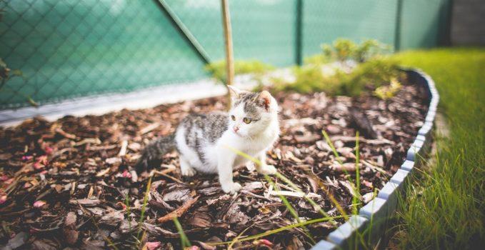 faire partir les chats de son potager ou jardin