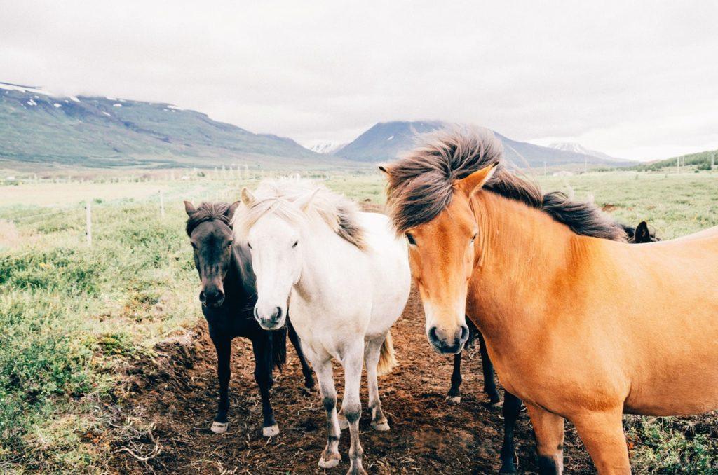 équipements et matériel pour les chevaux