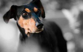 Adoption d'un chien à la SPA