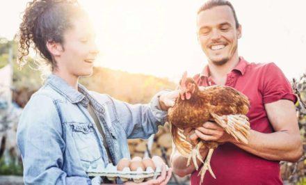 pourquoi faire le choix d'une poule
