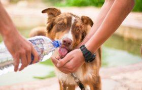 Assurance pour une chienne en gestation