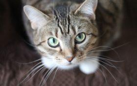 assurance pour un chat