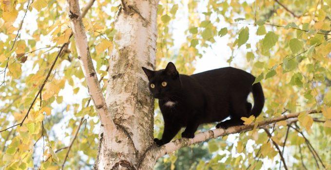 activités du chat en journée