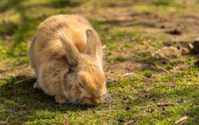 comment s'occuper d'un lapin