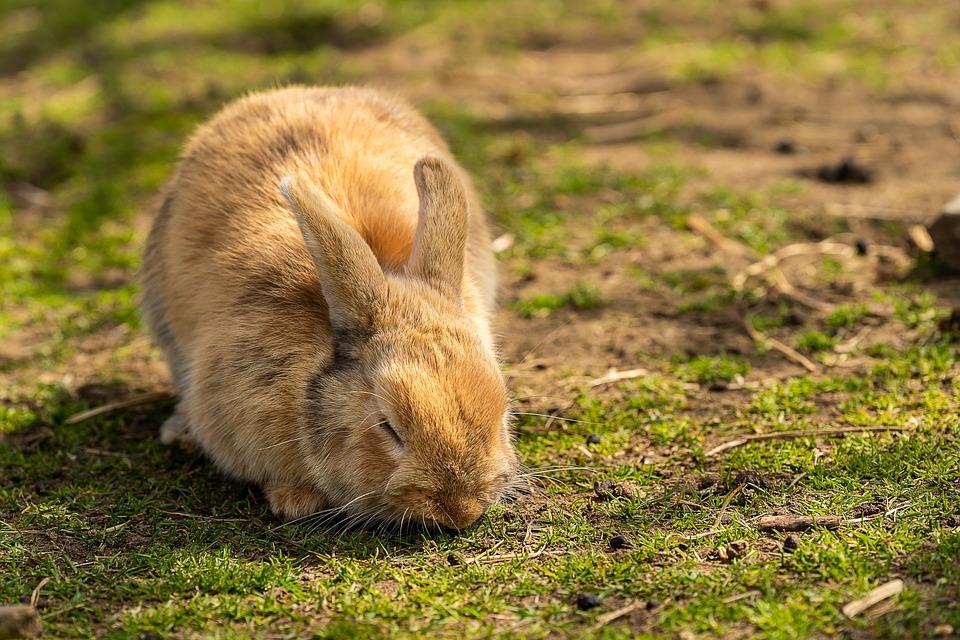 Comment bien s'occuper de son lapin domestique ?