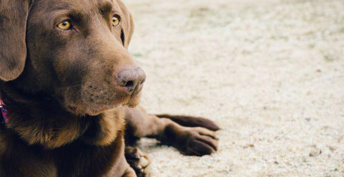 Transport de votre chien pour des trajets