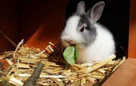 aménagement d'une cage pour des lapins