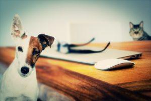 pipette tique chien