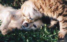 bien nourrir son chat ou son chien