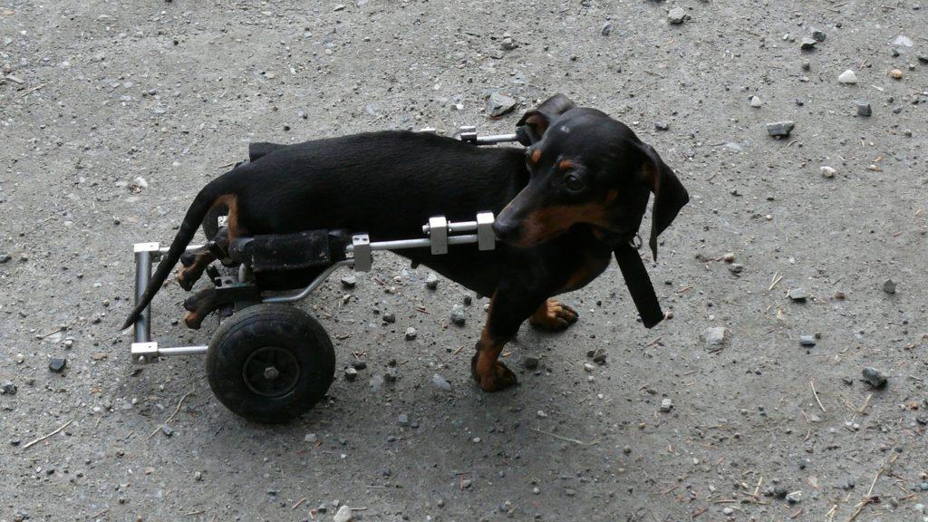Avantages pour assurance de chien