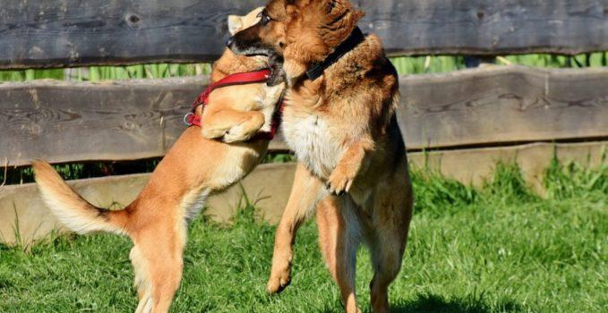conduire votre animal chez le vétérinaires en urgence