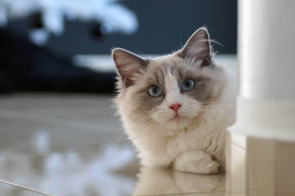 chat si vous vivez dans une maison