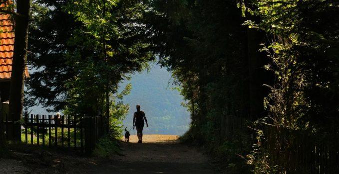 la promenade de votre chien