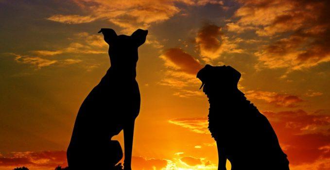 chiens qui aboient