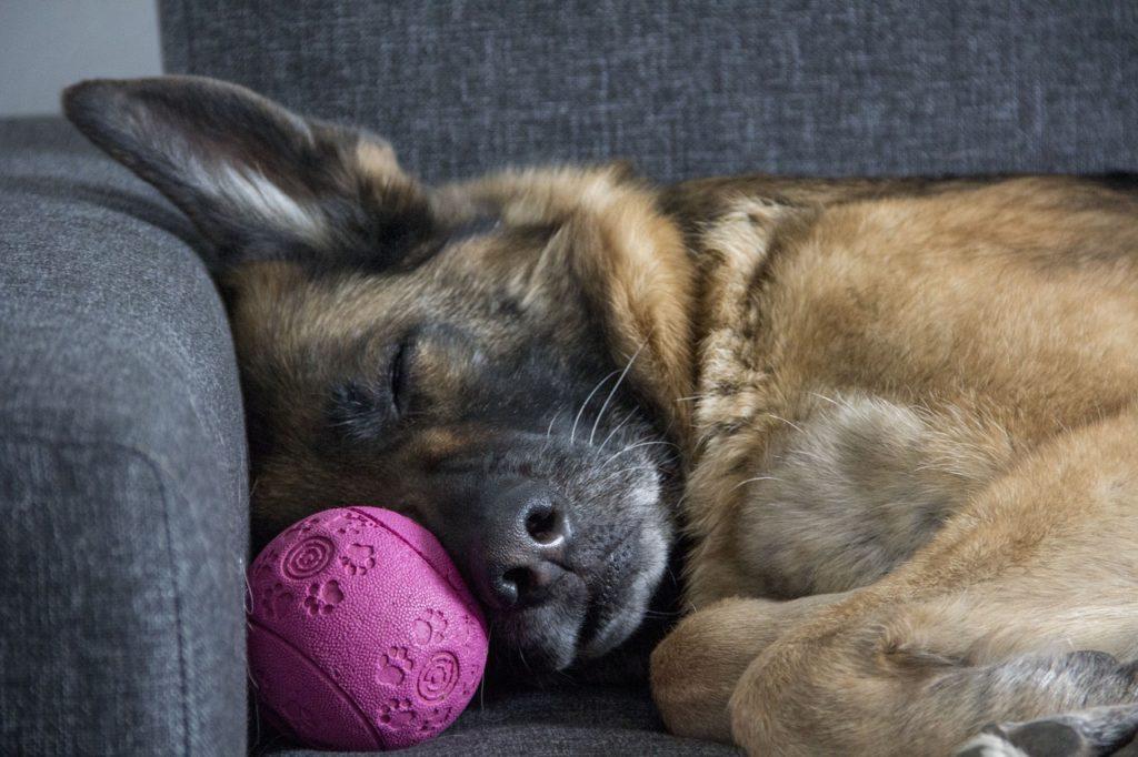 chenil pour pension du chien