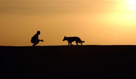 chien fugueur clôture