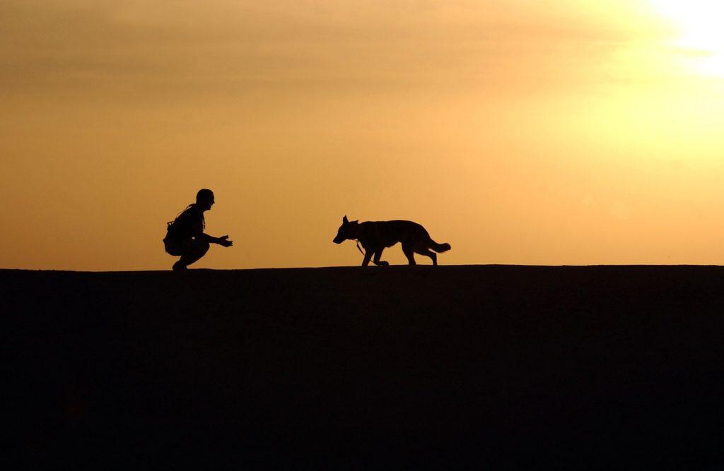 un jeune chien de refuge