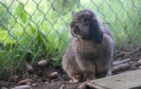 clapier confortable pour un lapin