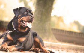 collier de dressage d'un chien