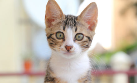 chatterie pour chats lors des absences
