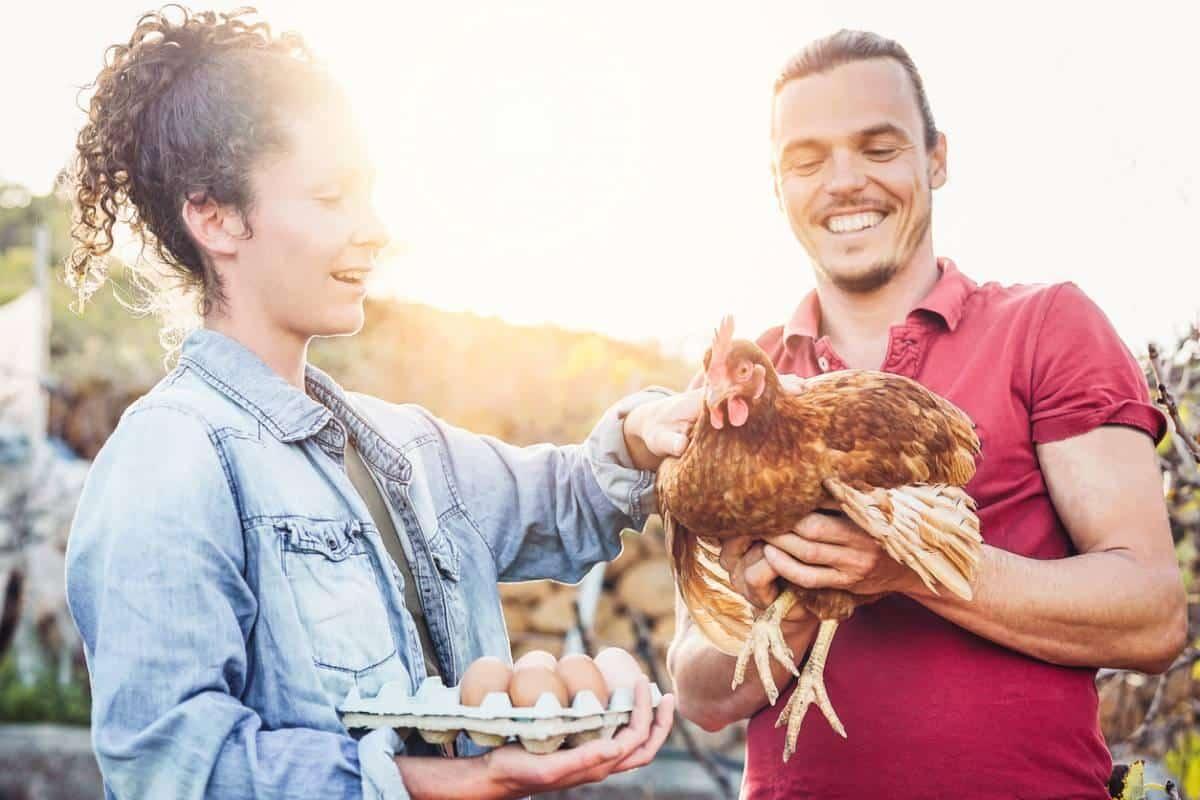 donner ses déchets aux poules
