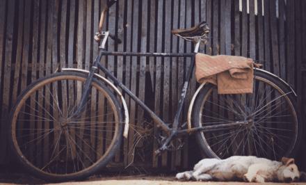 partir faire du vélo avec son chien