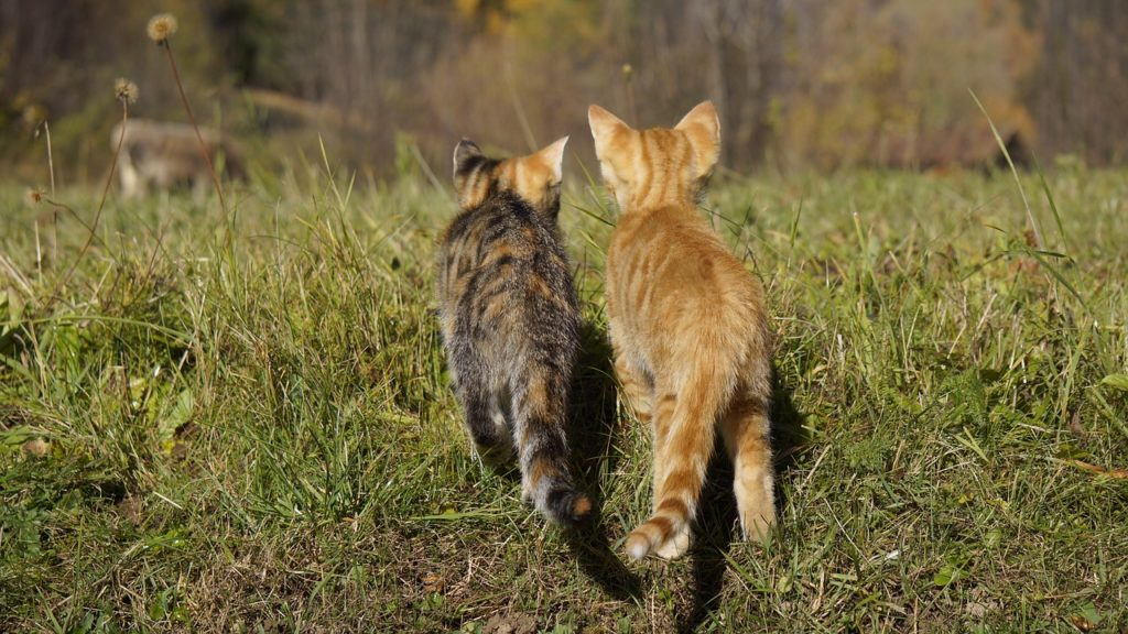 solutions de garde des chats