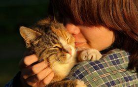 garder un chat à domicile