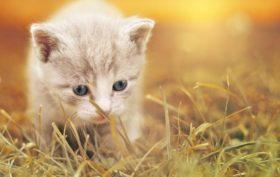 bac à litière pour votre chat