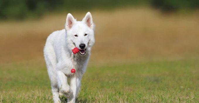 les jouets pour faire jouer les chiens