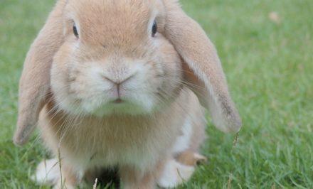 bien être du lapin