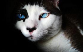 donner un nom a son chat