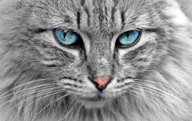 alimentation du chat avec des croquettes de magasin