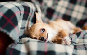 pension pour animaux gérée par des professionnels