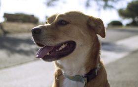 protéger son chien contre les parasites
