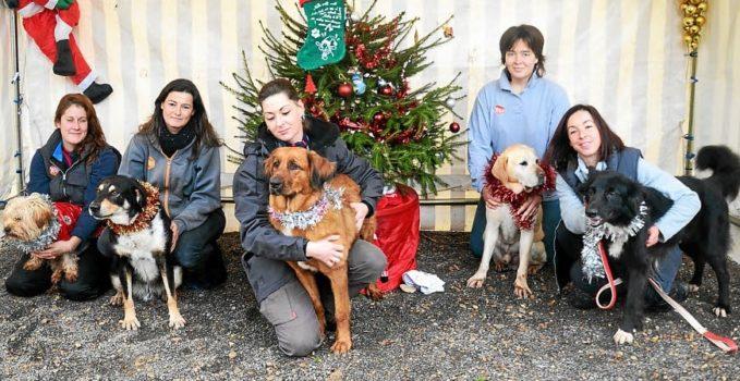 Société Protectrice des Animaux a particulièrement célébré la fête de Noël