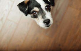 stopper les aboiements de son chien
