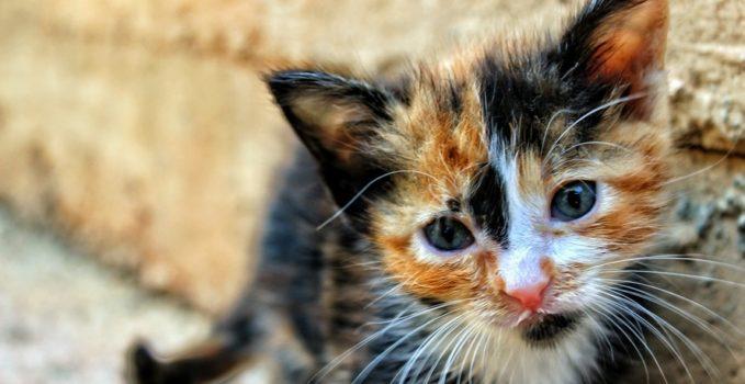 chat errant de la rue pour le sauver