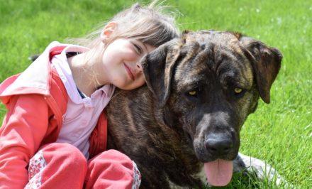 choisir un chien pour un enfant