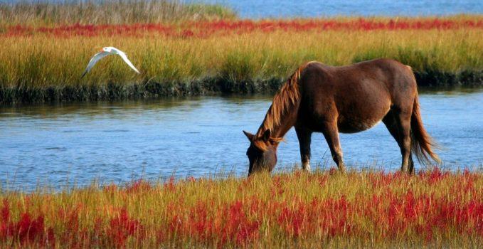 vermifuger ses chevaux