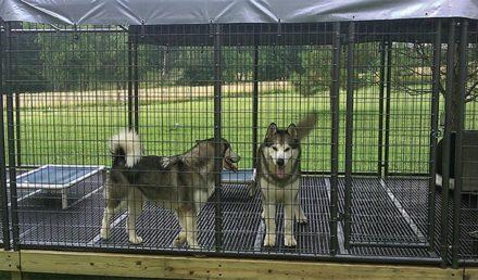 chenils pour les chiens