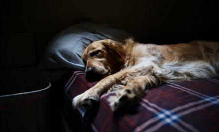 un chien qui vit en appartement